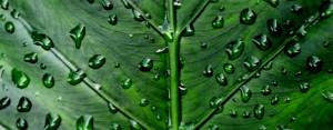green_leaf_banner